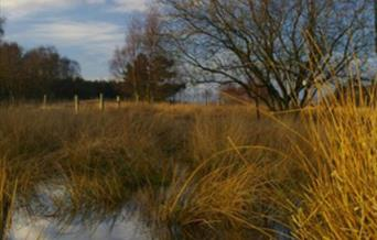 An image of grasses & pond at Allerthorpe Common