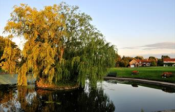 An image of a willow tree at the edge of the village pond in Hutton Cranswick