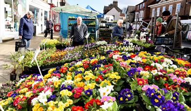 An image of a plant stall at Pocklington market