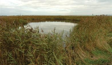 An image of a pond at Blacktoft Sands Nature Reserve